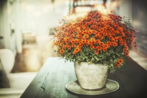 Autumn home flowers decoration in vase on table in living room